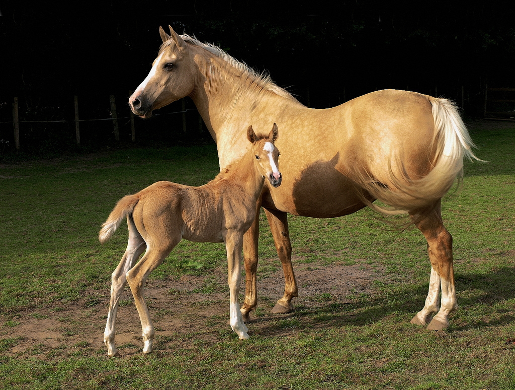 Popular Wallpaper Horse Ultra Hd - mare_and_foal  2018_465140.jpg